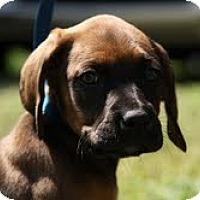Adopt A Pet :: Boone - Staunton, VA