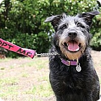Adopt A Pet :: HAPPY - SWEET PERSONALITY!! - Plano, TX