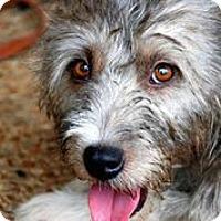 Adopt A Pet :: Usa - Austin, TX