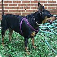 Adopt A Pet :: Millie - McDonough, GA