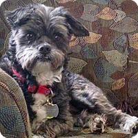 Adopt A Pet :: Buddy 2015 (m/c) - Chesterfield, MI