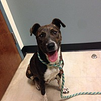 Adopt A Pet :: Candela - Middletown, NY