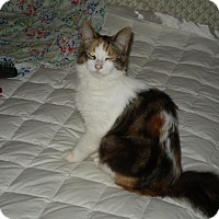Adopt A Pet :: Fluffy - Leamington, ON