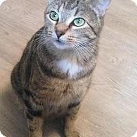 Adopt A Pet :: Libby - Edmonton, AB
