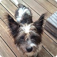 Adopt A Pet :: Parker - Newtown, CT