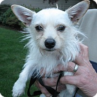 Adopt A Pet :: Finley - Salem, OR