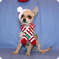 Adopt A Pet :: Teddy - Winters, CA