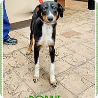 Adopt A Pet :: Robbie - Oviedo, FL