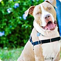 Adopt A Pet :: Skotch - Houston, TX