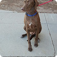 Adopt A Pet :: Myles in Ct - Manchester, CT