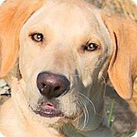 Adopt A Pet :: KIRK(A FAMILIES