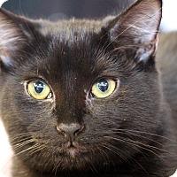 Adopt A Pet :: Swift - Sarasota, FL