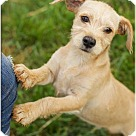 Adopt A Pet :: Dudley (POM JS)