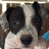 Adopt A Pet :: Bronson - Rancho Cucamonga, CA