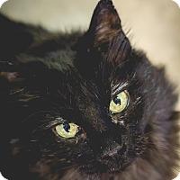 Adopt A Pet :: Pearl - Leander, TX