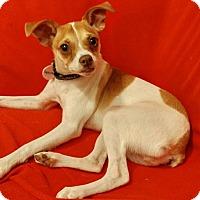 Adopt A Pet :: Squirrel - Verona, NJ