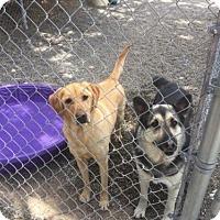 Adopt A Pet :: Boots & Boscoe - Laurel, MT