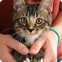 Adopt A Pet :: Tiki - San Carlos, CA