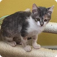Adopt A Pet :: Sophie - Alamo, CA