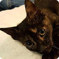 Adopt A Pet :: Crumpet - Colonial Heights, VA