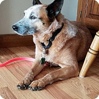 Adopt A Pet :: Paprika - Creston, OH