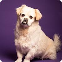 Adopt A Pet :: Bucky Meet ME!!!! - Norwalk, CT
