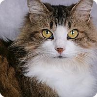 Adopt A Pet :: Zoey - Cincinnati, OH