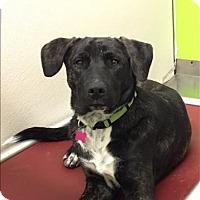 Adopt A Pet :: Greta - Neosho, MO