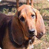 Adopt A Pet :: Leona - Orlando, FL