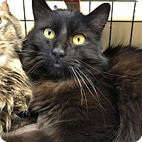 Adopt A Pet :: Orchid - Maryville, MO