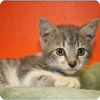 Adopt A Pet :: TED - SILVER SPRING, MD