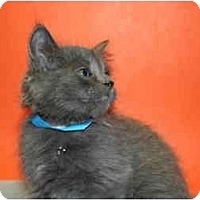 Adopt A Pet :: NICK - SILVER SPRING, MD