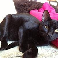 Adopt A Pet :: Felix (LE) - Little Falls, NJ