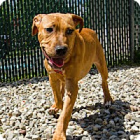 Adopt A Pet :: Clay - Tinton Falls, NJ