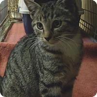 Adopt A Pet :: JOISE - Acme, PA