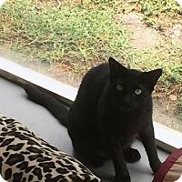 Adopt A Pet :: Merlin - Boca Raton, FL