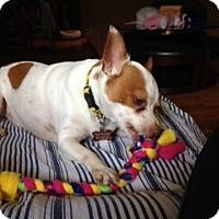 Adopt A Pet :: Ralphie - Beavercreek, OH
