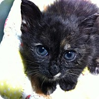 Adopt A Pet :: Dinah - Watkinsville, GA