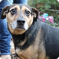 Adopt A Pet :: Gandy  wants to run with you!  (lower fee!) - Locust Fork, AL