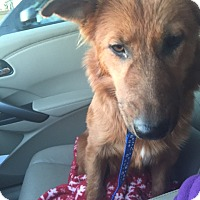 Adopt A Pet :: Roo - Maricopa, AZ