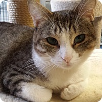 Adopt A Pet :: SWEETHEART - Phoenix, AZ