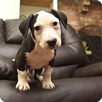 Adopt A Pet :: Rocky - PORTLAND, ME
