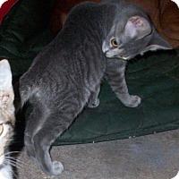 Adopt A Pet :: TIFF - Morriston, FL