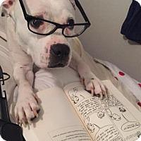 Adopt A Pet :: Rosey - Lakeland, FL