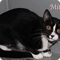 Adopt A Pet :: Mitzka - Bradenton, FL