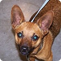 Adopt A Pet :: MT - Dax - Lafayette, LA