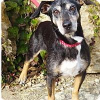 Adopt A Pet :: Bilbo - Princeton, MN