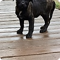 Adopt A Pet :: Rufus - Bartonsville, PA