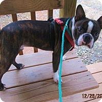 Adopt A Pet :: HOOTIE...aka Rudy - Williston Park, NY