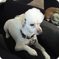 Adopt A Pet :: Scooter - San Marcos, CA